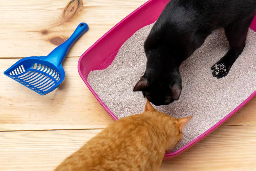 Inappropriate Elimination In Cats: Why It Happens and How To Prevent It: Two cats sniffing litterbox