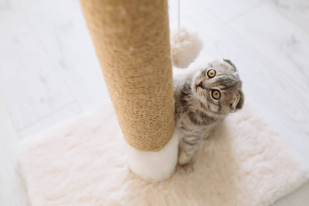 Scratch This, Not That: Understanding Why Cats Like To Scratch. Cat scratching post.