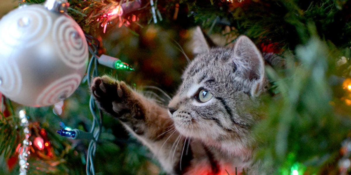 Cat playing with bulb on Christmas tree
