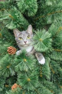 Holiday Pet Safety: Cat in Christmas tree
