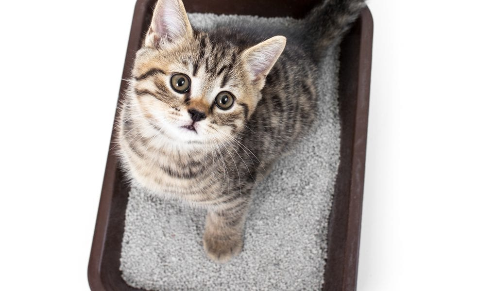 Cat in litterbox