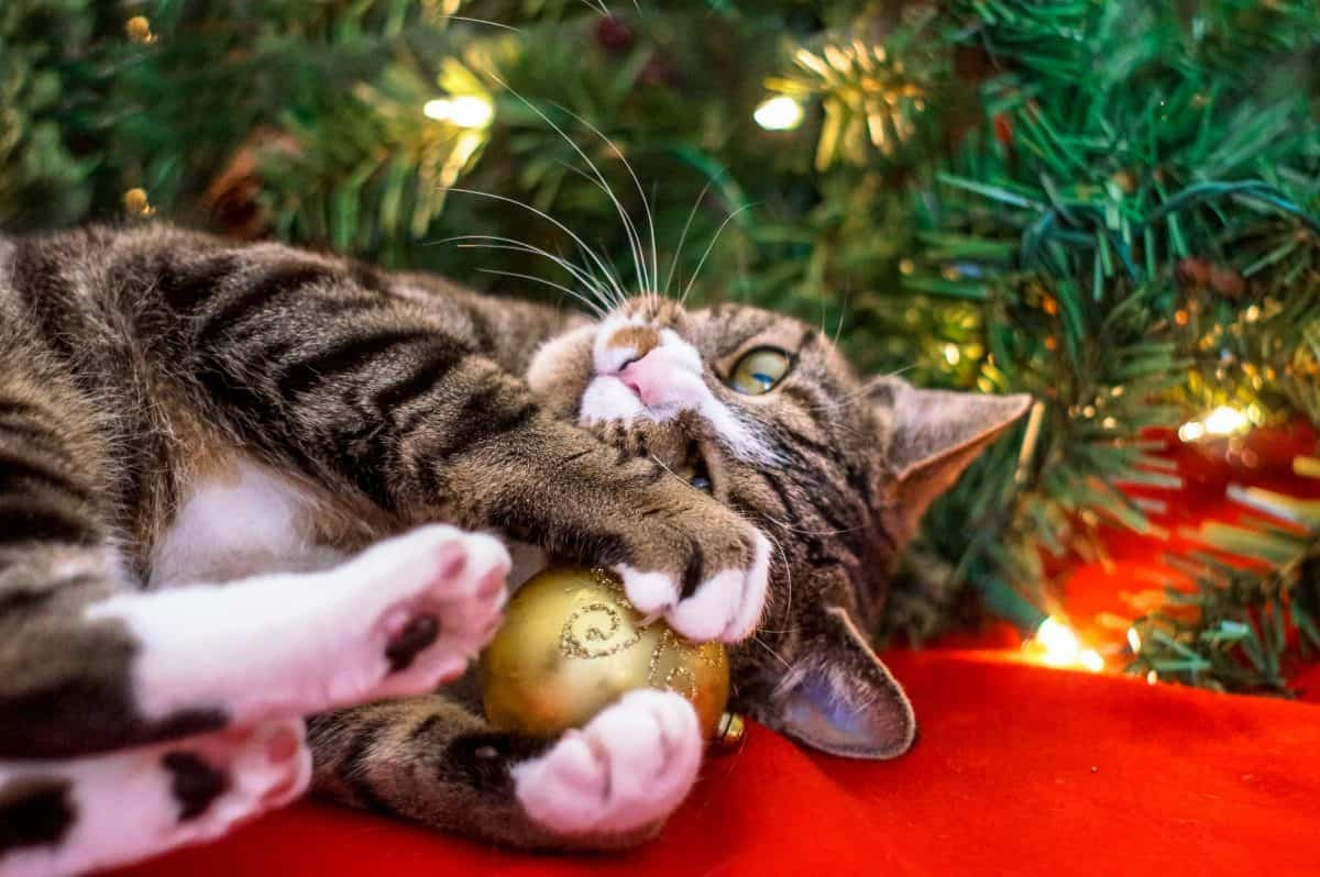 Cat clutching bulb from Christmas tree