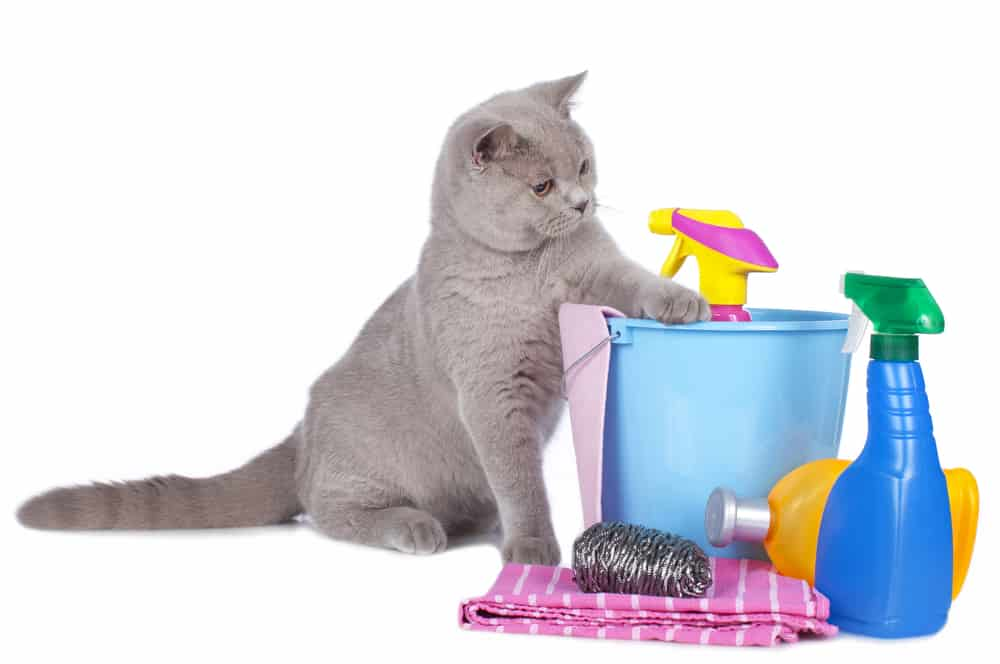 Cats and Household Toxins: Cat with household toxins