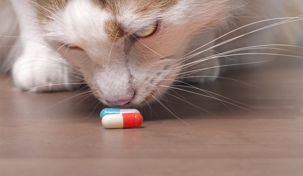 Cat with pills awareness for March is Pet Poison Prevention Month