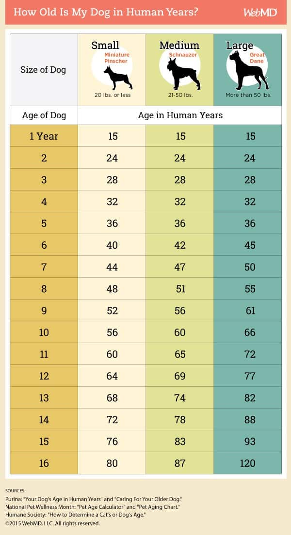 Chart of Dog Years