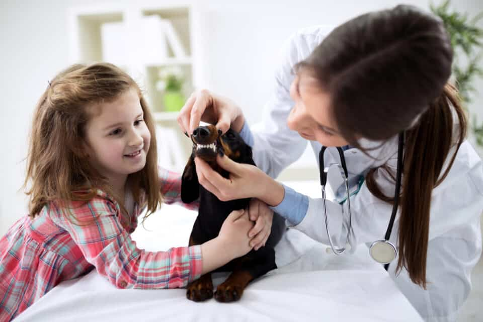 Little girl with her dog and a veterinarian examining the dogs teeth