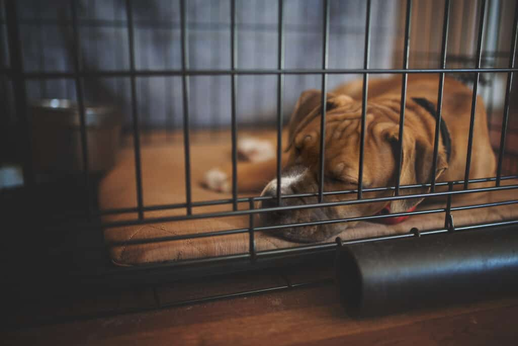 Crate Training 101: Large brown dog sleeping in crate