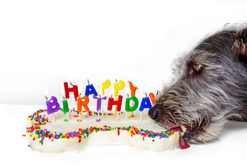 Dog Birthday Bake