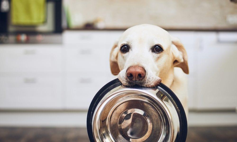 Dog holding his dish