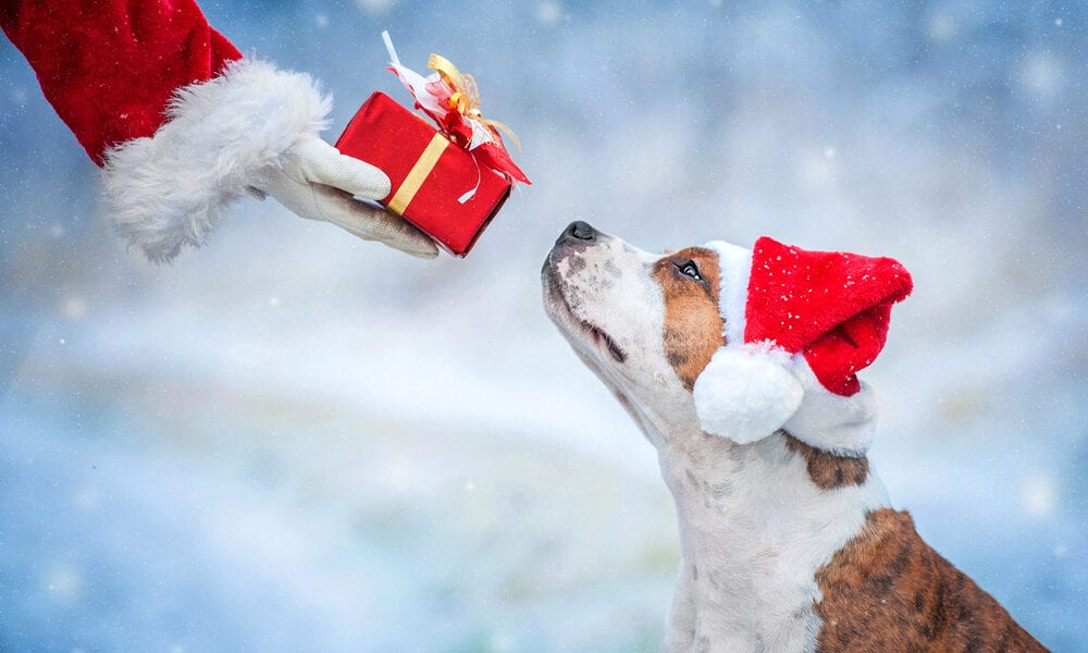 Dog with santa holding gift