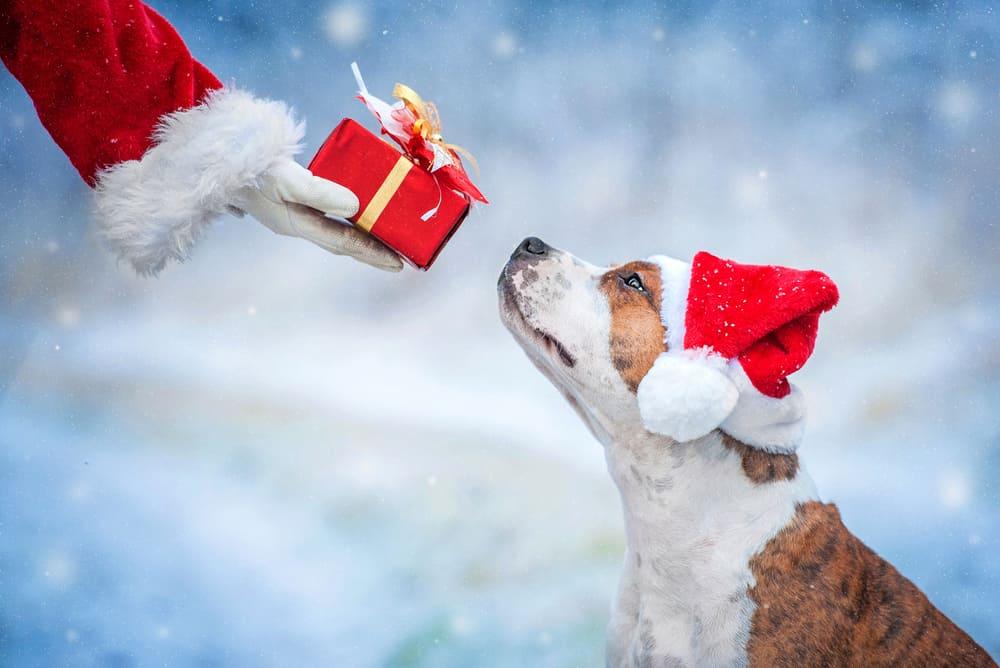 Dog with santa holding gift