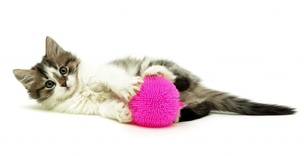 How To Kitten-Proof Your Home - Kitten playing with pink ball toy