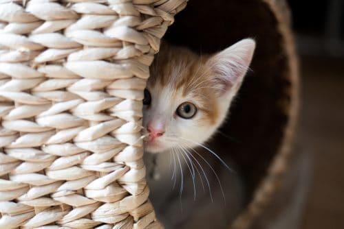 How To Kitten-Proof Your Home - Kitten hiding in wicker basket