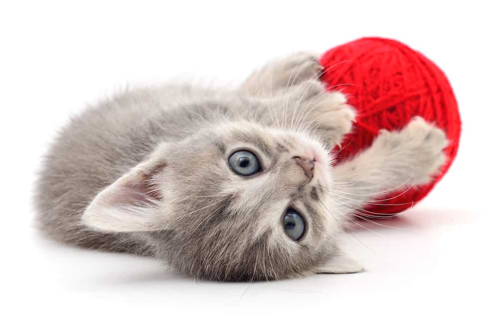 Kitten with red yarn ball