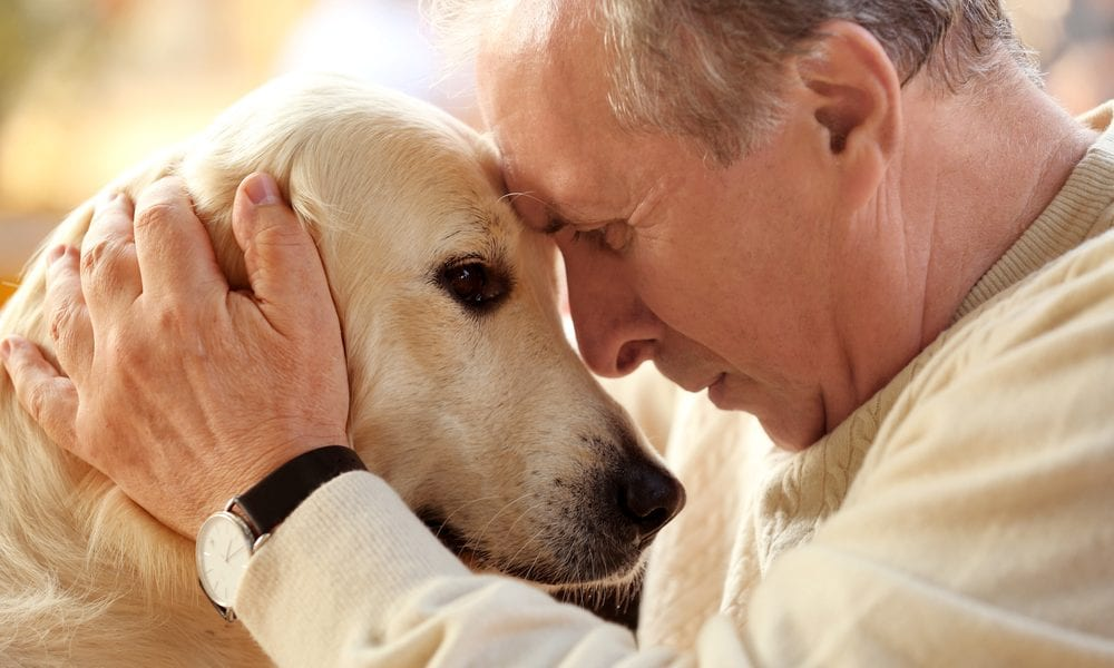 Top 10 Best Dogs for Seniors