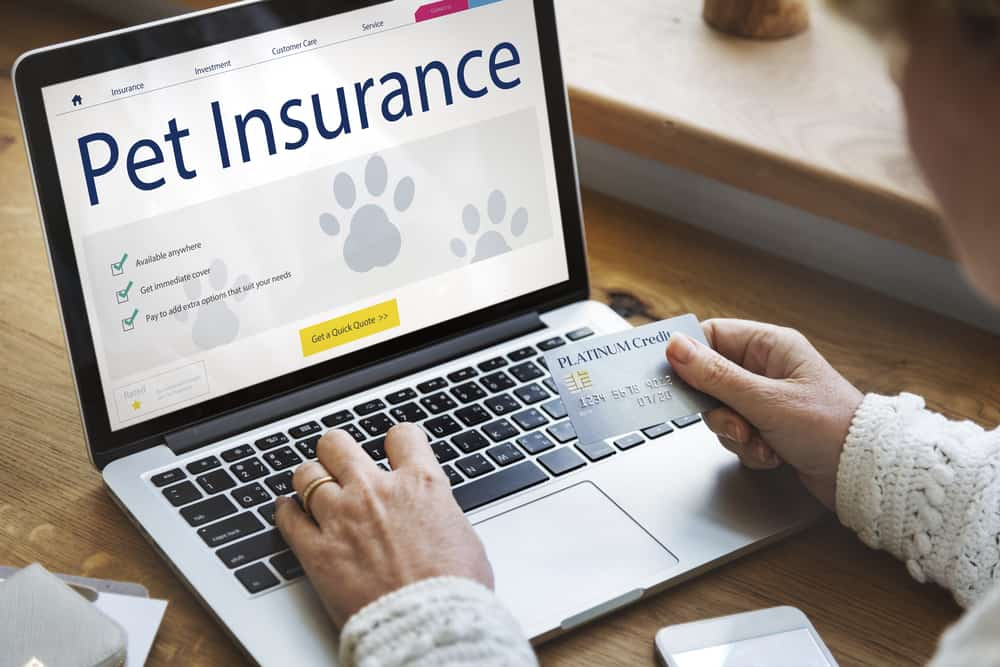 Looking up pet insurance plans on a laptop for February Is National Pet Dental Health Month