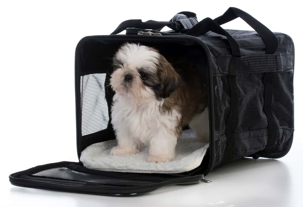 How To Choose The Right Dog Breed For Your Family: Shih Tzu in dog carrier