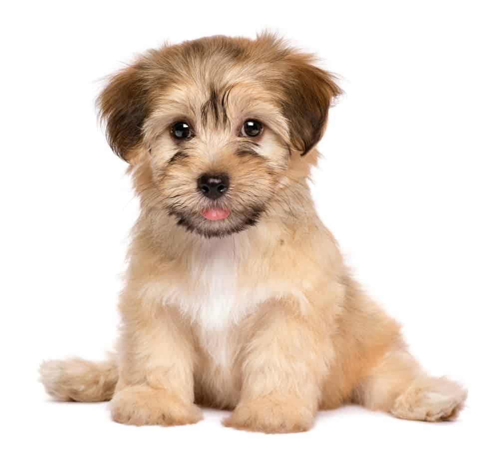 New puppy sitting