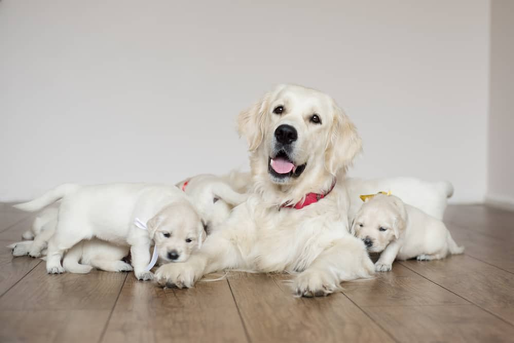 What to feed your new puppy: puppies with mom