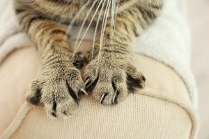 Scratch This, Not That: Understanding Why Cats Like To Scratch. Cat paws on a couch.