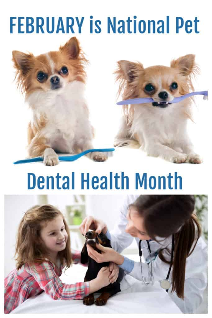 PIN for FEBRUARY is National Pet Dental Health Month