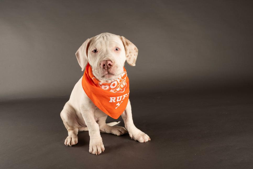 "Photo Credit: ""Fletcher"" ANIMAL PLANT | Elias Weiss Friedman for Puppy Bowl 2021"