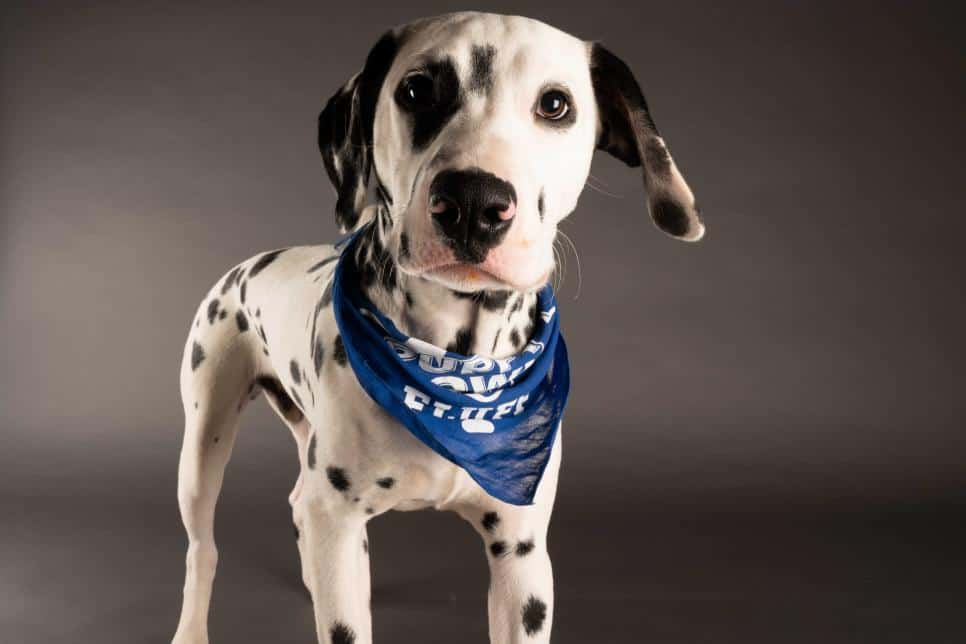 "Photo Credit: ""Hank"" ANIMAL PLANT | Elias Weiss Friedman for Puppy Bowl 2021"