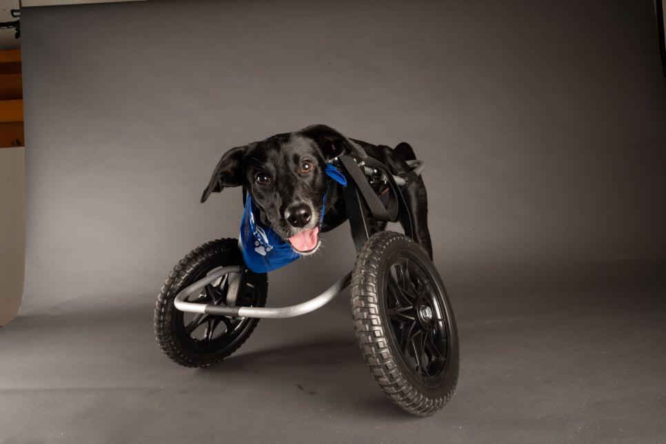 "Photo Credit: ""Jett"" ANIMAL PLANT | Elias Weiss Friedman for Puppy Bowl 2021"