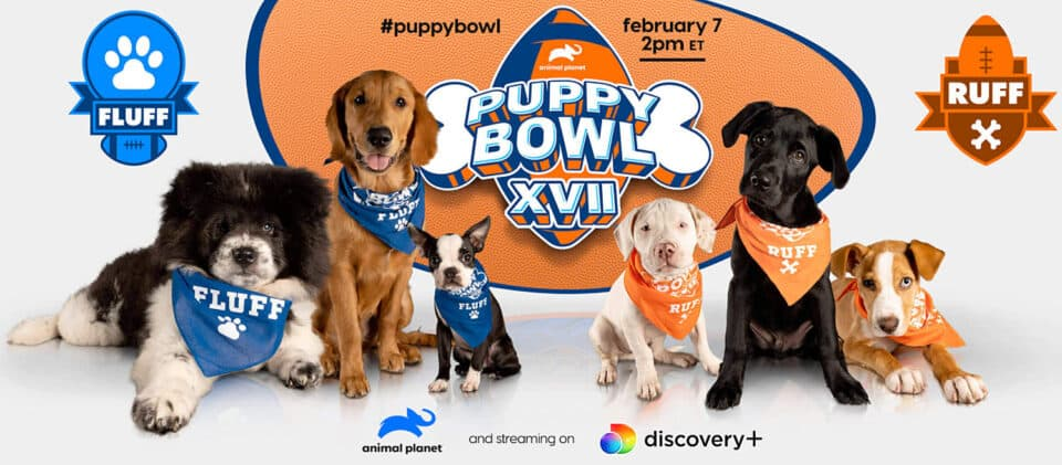 Puppy Bowl Graphic