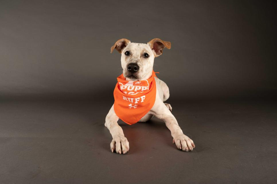 """Photo Credit: """"Rumor"""" ANIMAL PLANT 