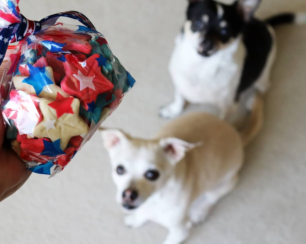 Dogs with bag Homemade 4th of July Dog Treat Recipe